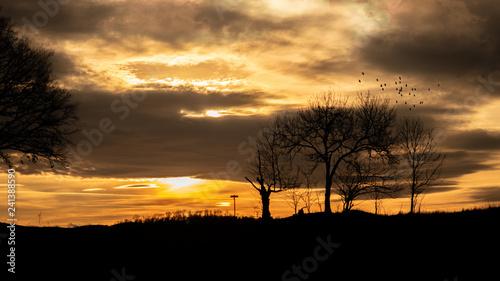 Feld-landschaft als Silhouette bei Sonnenuntergang