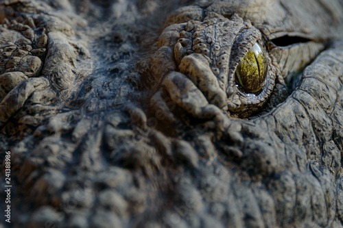 Poster Crocodile Nile crocodile (Crocodylus niloticus). Detail of eye. South Africa
