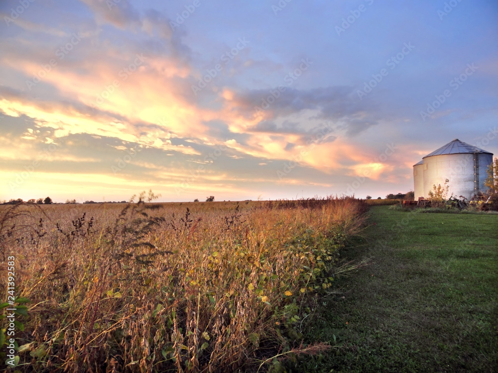 Fototapeta Midwestern Farm with Silo and Soybean Field at Sunset