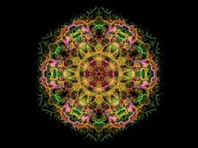 Yellow, Pink And Green Abstract Flame Mandala Flower, Ornamental Floral Round Pattern On Black Background. Yoga Theme.