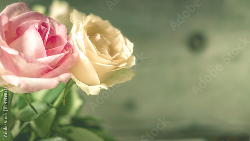 Zwei Rosen, Hintergrund beschreibbar