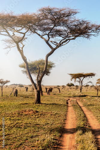 Group of elephants walking in beautiful national park Serengeti, Tanzania, Africa