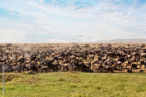 Cuadros en Lienzo  Large group of african safari animals.