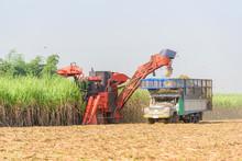 Harvest The Sugarcane By Sugar...