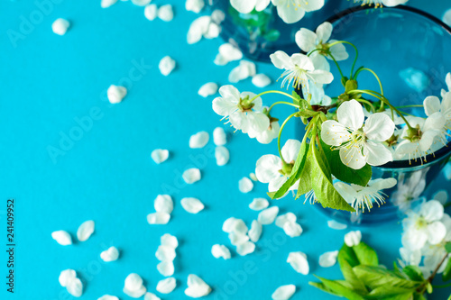 Canvas Prints Countryside White cherry blossom twigs in glass vase on blue paper background. Copy space. Selective focus