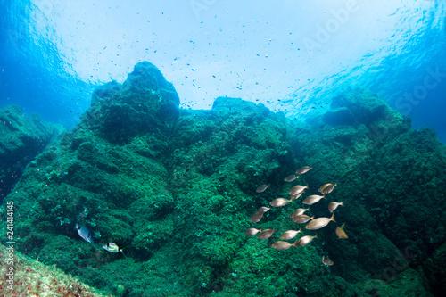 Fotomagnes Podwodna sceneria. Morze Śródziemne.