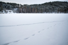 Fresh Footprints In The In The Snow Covered Landscape
