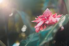 Tropische Pflanze Im Botanisch...