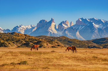 TORRES DEL PAINE, CHILE. grazing horses in front of the magnificent mountain range