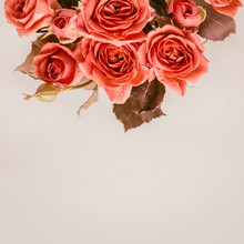 Beautiful Coral Mini Roses On A Smoky Gray Background