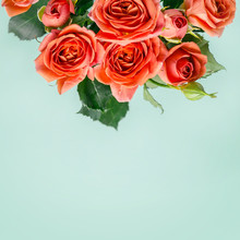 Beautiful Coral Mini Roses On Turquoise Background