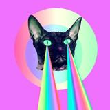 Fototapeta Tęcza - Fashion cat with rainbow lasers from eyes. Minimal collage funny art