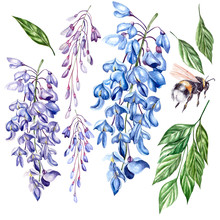 Beautiful Watercolor Set Witt Flowers Of Wisteria, Leaves And Bee.
