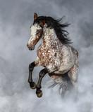 Hodowla koni Appaloosa w lekkim dymie. - 241454353