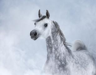 Arabian horse in light smoke.