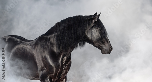 Foto op Canvas Paarden Black Pura Spanish stallion in light smoke.