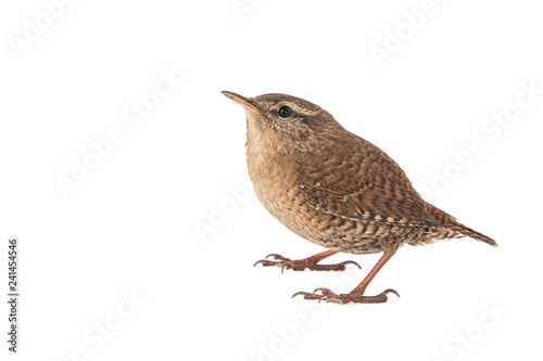 Cuadros en Lienzo Eurasian Wren, Troglodytes troglodytes, isolated on white background