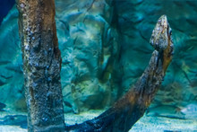 Old Rusty Ship Anchor At The Bottom Of The Ocean In Closeup, Vintage Aquarium Decoration