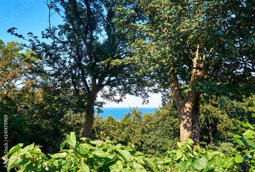 Photo  Looking through the trees on the blue Baltic Sea