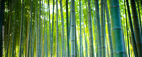 Poster Bamboe Bamboo Groves, bamboo forest in Arashiyama, Kyoto Japan.