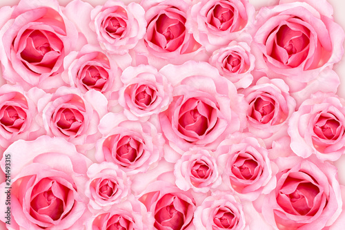 Abstract Background. Fresh flower pink roses wallpaper. love and Valentine's Day. - 241493315