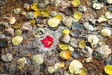Fall Leaves HD For Earthy Cris...