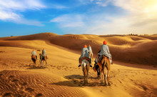 Camel Caravan At Thar Desert, Jaisalmer, Rajasthan, India