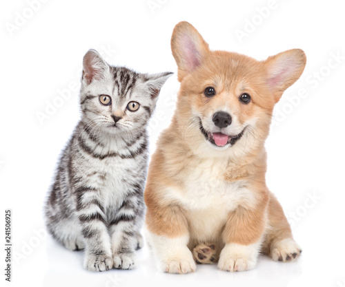 Happy corgi puppy with open mouth and sad tabby kitten together. isolated on white background © Ermolaev Alexandr