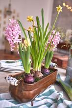 Spring Flowers Pink Hyacinths ...