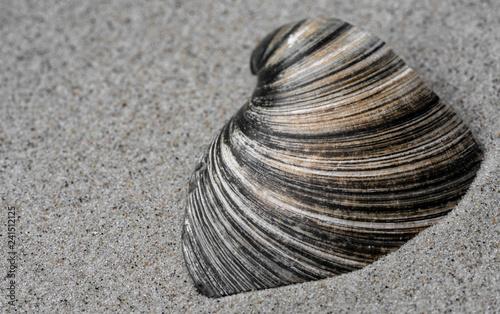 Muschelscherbe