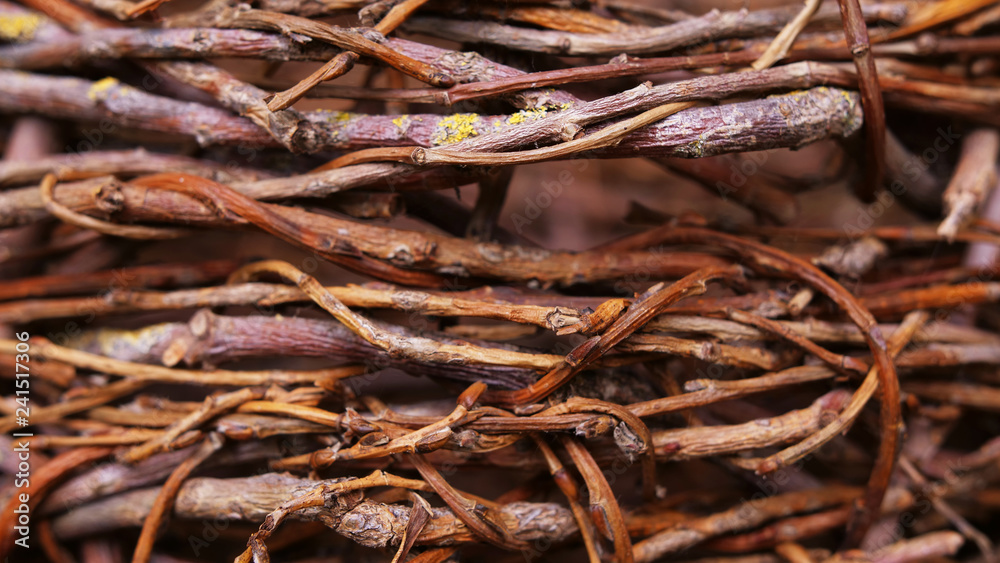 Fototapety, obrazy: woven willow tree background