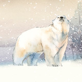 Hand-drawn polar bear in the snow watercolor style vector - 241517534