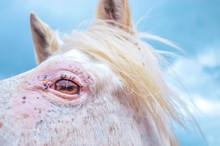 Eye Of White Horse