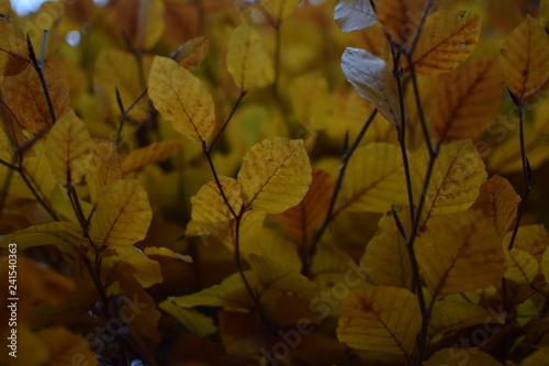Fotografie, Obraz  Herbstblätter