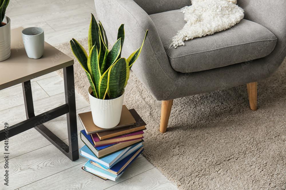 Fototapety, obrazy: Houseplant in interior of modern room