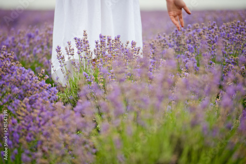 Foto auf AluDibond Rosa hell Young girl in white dress, posing in a lavender field. Close-up.
