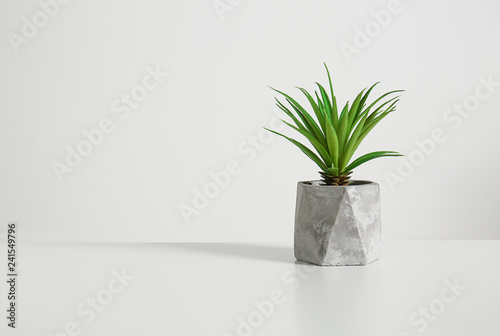 Green plant in pot on light background Canvas