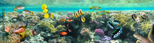 Poster Coral reefs Underwater scene. Coral reef, colorful fish groups and sunny sky shining through clean sea water.