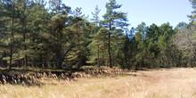 Laesoe / Denmark: Small Forest...