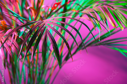 Tropical palm on color background - 241561790