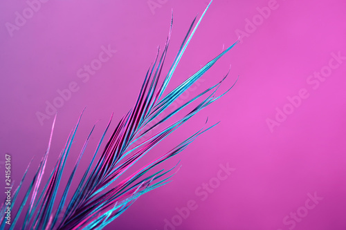 Fotografie, Obraz  Tropical leaf on color background