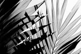 Palmowe liście closeupon blado białe tło - 241575780