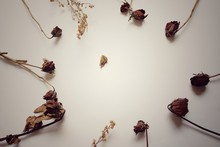 Brown Rose Flowers .break My Heart .be Sad Concept. - On White Background
