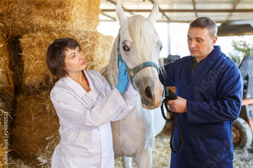 obraz lub plakat Vet giving medical exam to horse