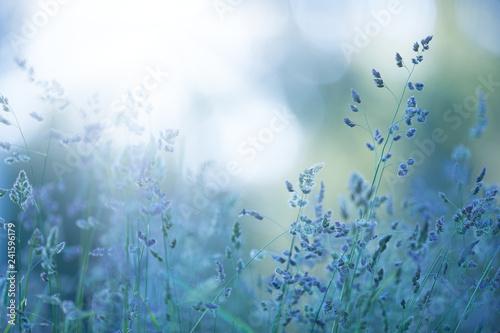 Poster Retro Grasses in the meadow