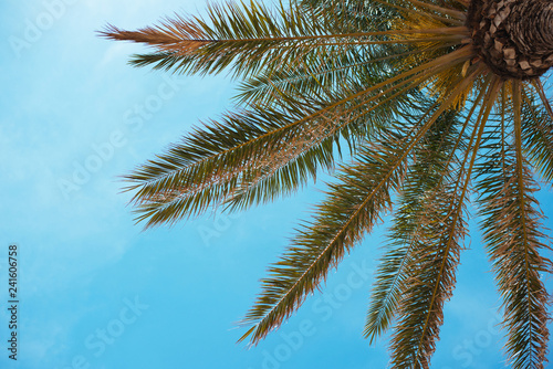Poster Palmier Palm tree against blue sky