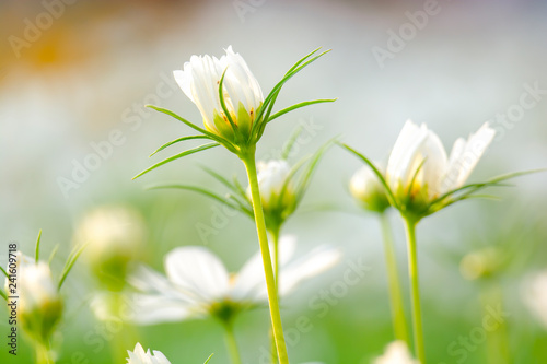 Valokuva  White flowers bloom in beautiful nature