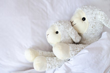 Two Sheep Lying In The Bed