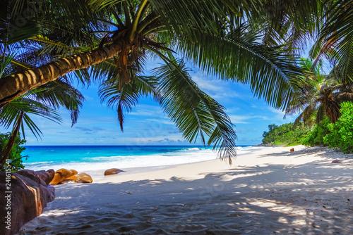 Photo sur Aluminium Palmier beautiful paradise beach, anse bazarca, seychelles 15