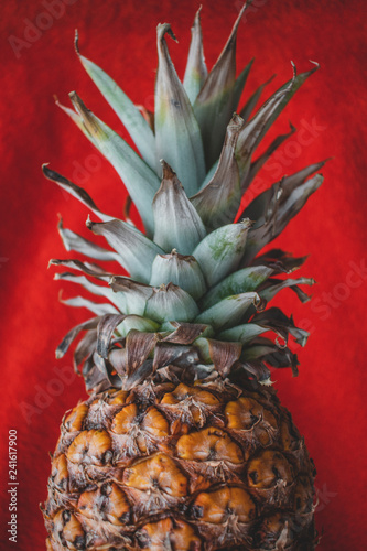 Fototapety, obrazy: The close up of a pineapple on a red background